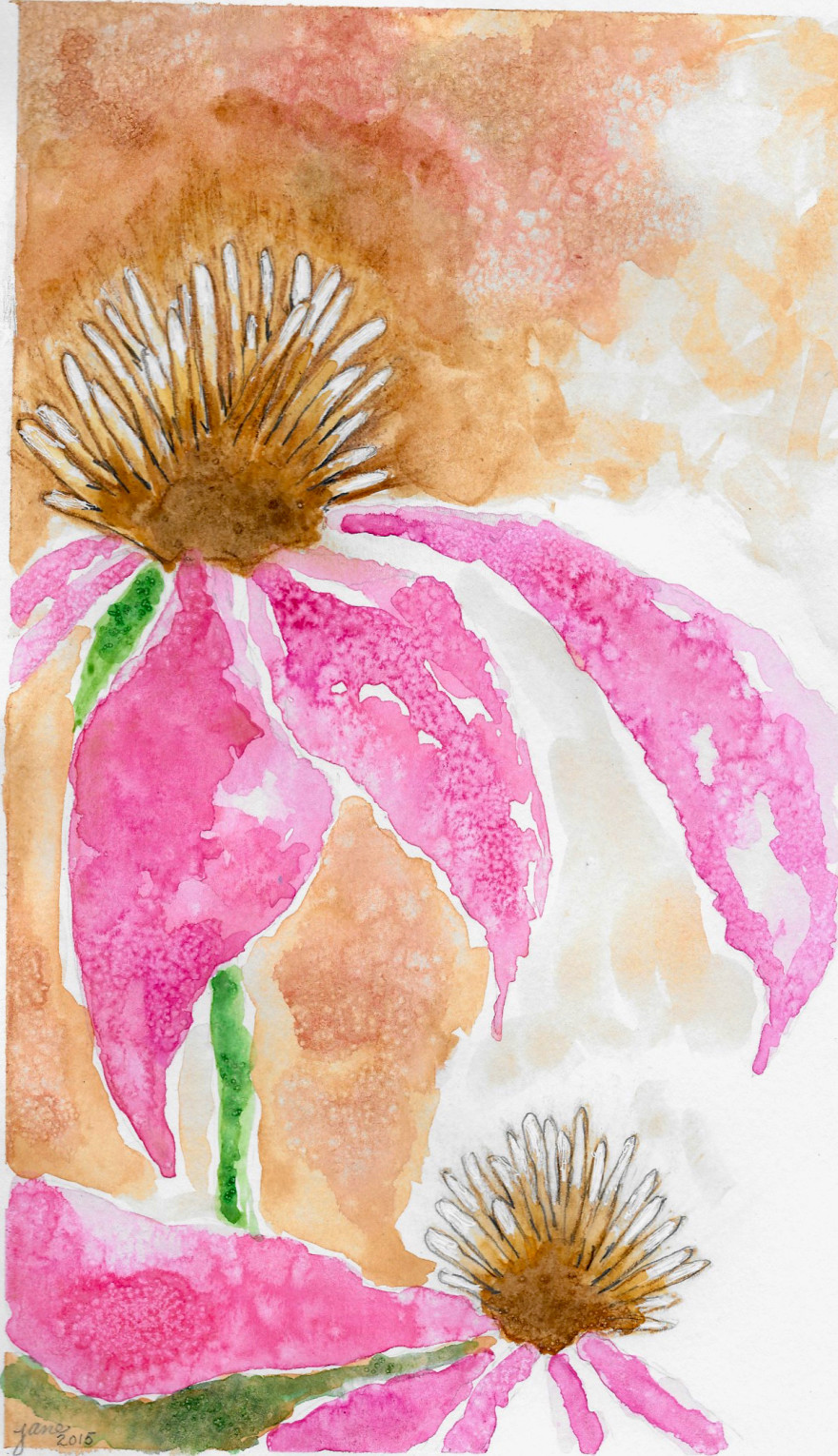 Coneflowers in Pink by Jane Martin | Watercolor Original Painting