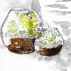 Terrariums by Jane Martin | Card from Watercolor Original