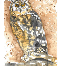 the-wise-old-owl-by-jane-martin-original-watercolor-painting
