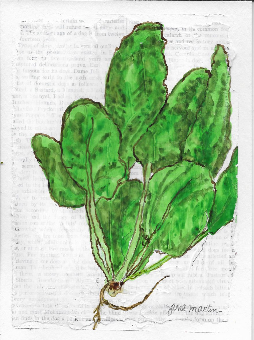 A Bunch of Spinach by Jane Martin | Original Watercolor Painting